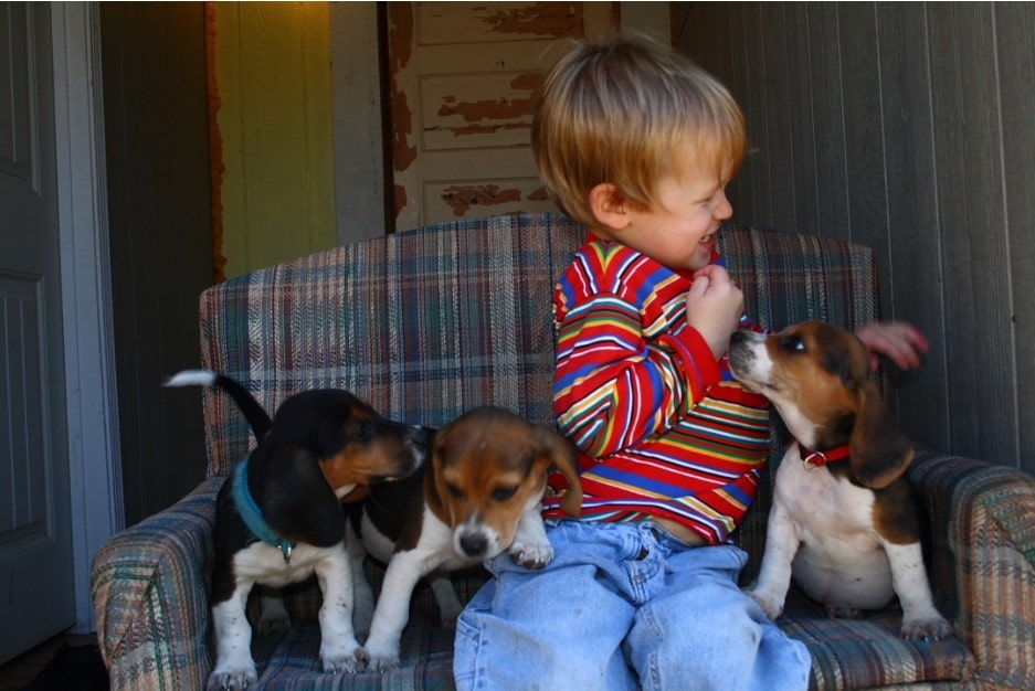 boy can't stand dog's touch
