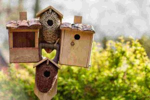 DIY bird feeders for kids: How to make them and what to feed the birds
