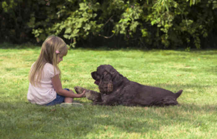 Pets to avoid because they present health risks